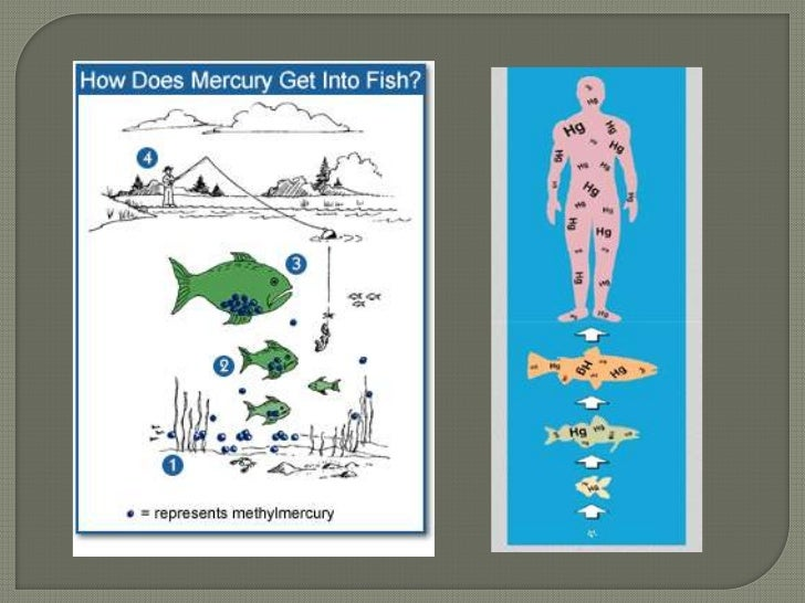 Mercury and heavy metal pollution for Where does mercury in fish come from