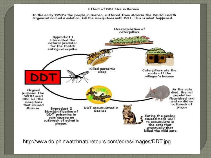 an analysis of the effects on the ecosystem by chemical pesticide ddt History and impacts of the pesticide ddt ddt is one of the most controversial chemical (the book's title comes from the effect ddt and other.