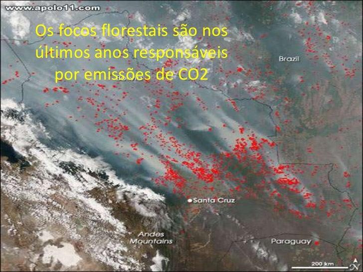 Os focos florestais são nosúltimos anos responsáveis   por emissões de CO2