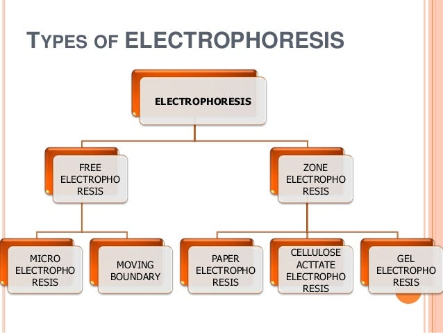 gel electrophoresis research paper With over 55,000 free term papers we have the writing help you need  gel electrophoresis storage:  all components are intended for educational research only.
