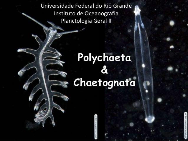 Polychaeta&ChaetognataUniversidade Federal do Rio GrandeInstituto de OceanografiaPlanctologia Geral II