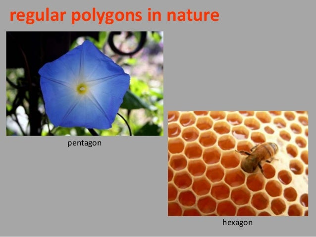 Regular Polygons In Nature Polygonal shapes