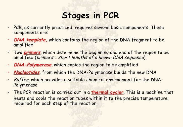 polymerase chain reaction steps pdf