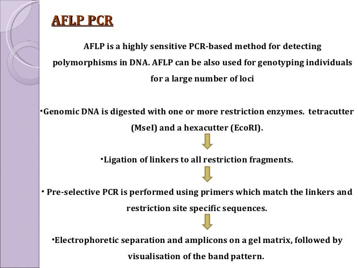 AFLP PCR <ul><li>Genomic DNA is digested with one or more restriction enzymes.  tetracutter (MseI) and a hexacutter (EcoRI...