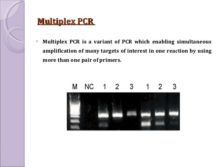 Multiplex PCR  <ul><li>Multiplex PCR is a variant of PCR which enabling simultaneous amplification of many targets of inte...