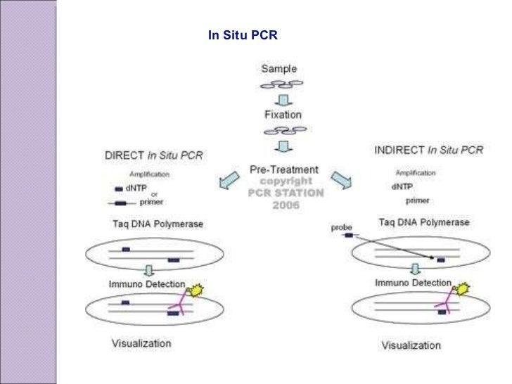 In Situ PCR