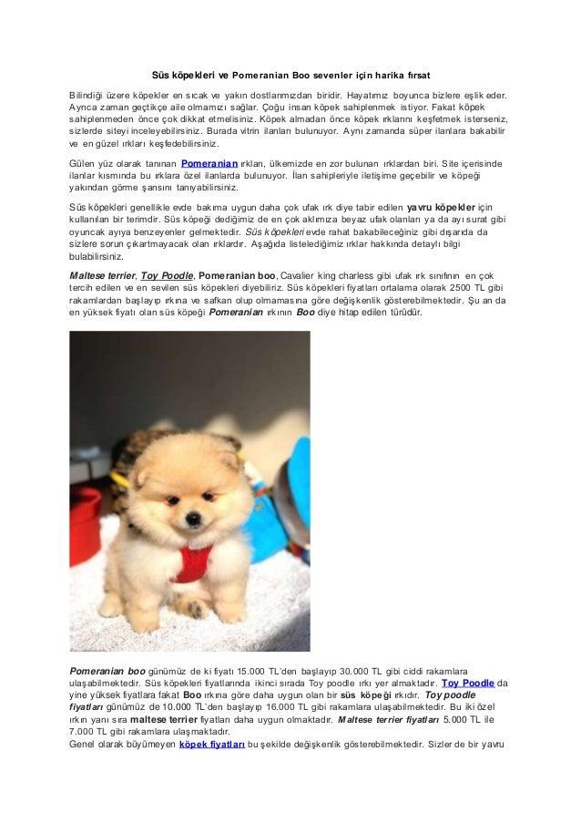 Süs köpekleri ve Pomeranian Boo sevenler için harika fırsat Bilindiği üzere köpekler en sıcak ve yakın dostlarımızdan biri...
