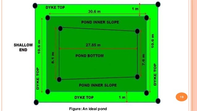 Construction of fish pond for Minimum depth for koi pond