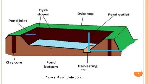 Construction of fish pond for Pond depth for fish