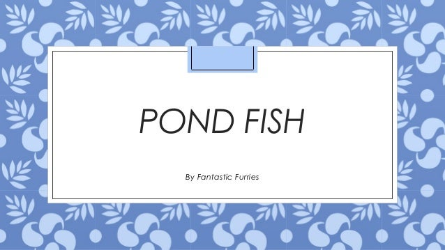 Species of pond fish for Pond fish species