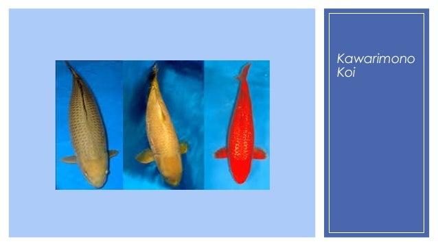 Species of pond fish for Garden pond fish species
