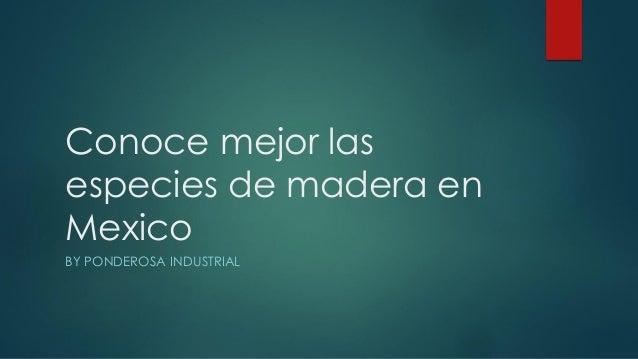 Conoce mejor las especies de madera en Mexico BY PONDEROSA INDUSTRIAL