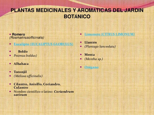 Proyecto jardin botanico norsup monteria for Jardin botanico medicinal