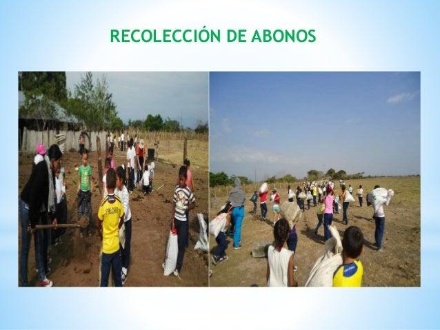 RECOLECCIÓN DE ABONOS