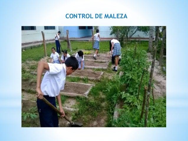 CONTROL DE MALEZA