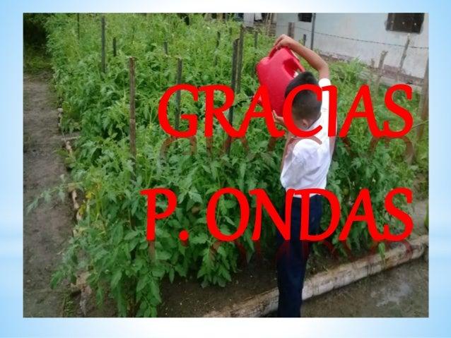 GRACIAS P. ONDAS