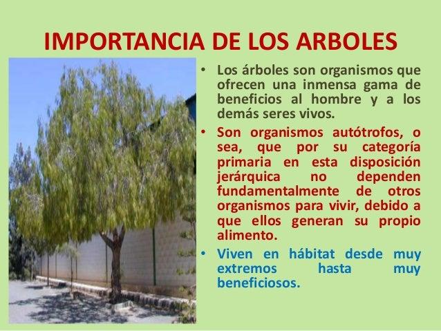 Seminario desarrollo sostenible y forestaci n ponencia podas for Medio en el que habitan los arboles