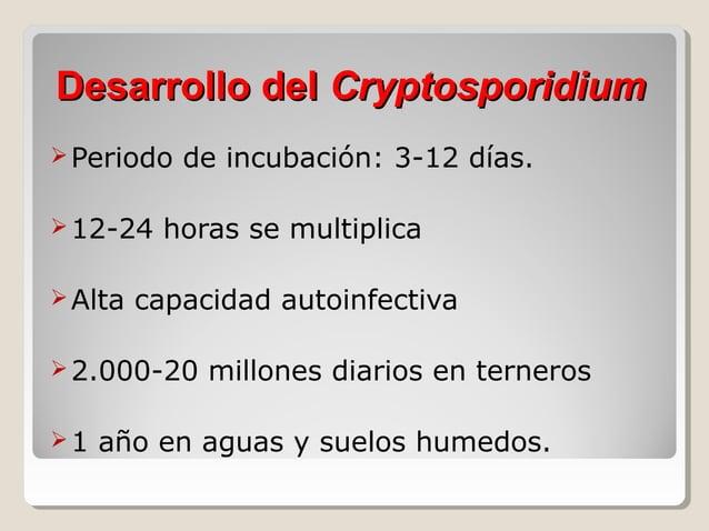 Cryptosporidium spp • •  Intracelular:  Inicia Intestino: Edad:  Coloniza:  Animales Hombre • • •  Hígado Páncreas S. Resp...