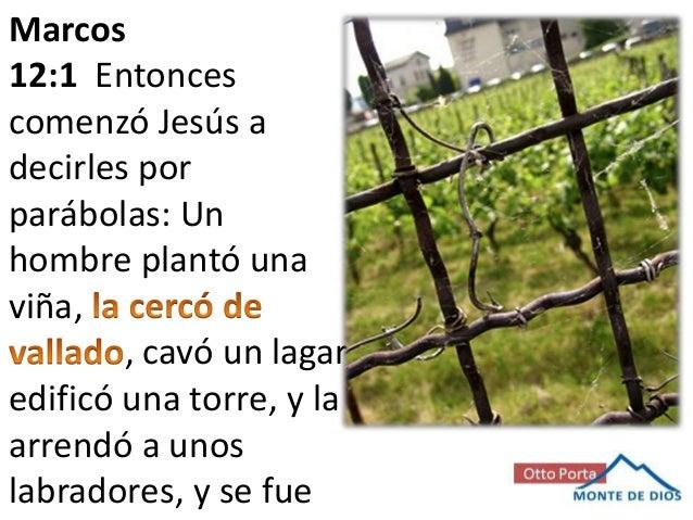 Marcos 12:1 Entonces comenzó Jesús a decirles por parábolas: Un hombre plantó una viña, , cavó un lagar, edificó una torre...