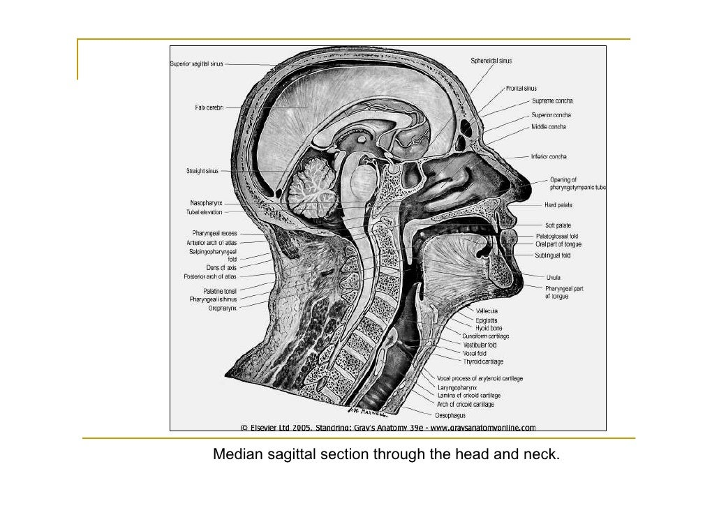 Detailedresult php in addition 8808864 further Ventral Dorsal Stream furthermore 7433768 additionally The Neuroscience Of Strategic Leadership. on dorsal and ventral brain