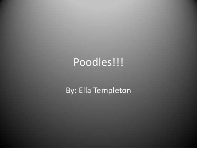Poodles!!!By: Ella Templeton
