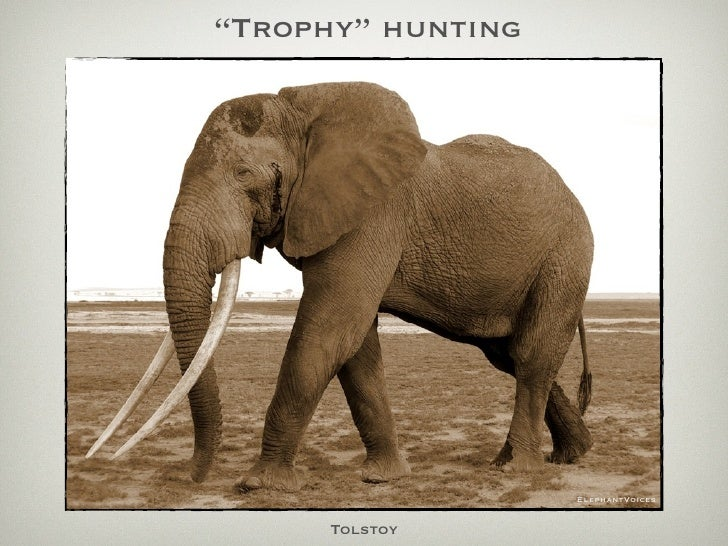 """Trophy"" hunting                        ElephantVoices         Tolstoy"