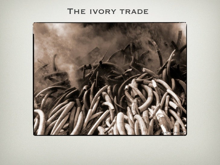 The ivory trade                       ElephantVoices