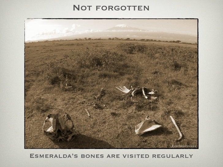 Not forgotten                                      ElephantVoices   Esmeralda's bones are visited regularly