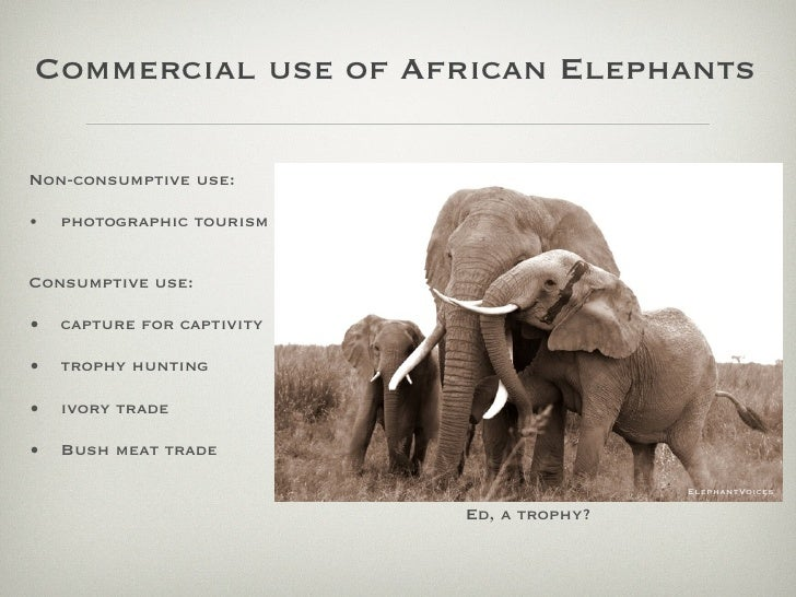 Commercial use of African Elephants  Non-consumptive use:  •   photographic tourism   Consumptive use:  •   capture for ca...