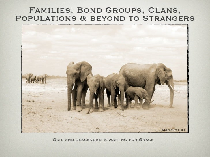 Families, Bond Groups, Clans, Populations & beyond to Strangers                                                    Elephan...