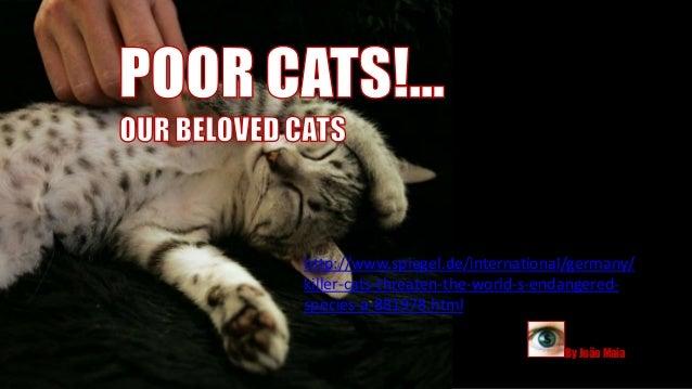 http://www.spiegel.de/international/germany/killer-cats-threaten-the-world-s-endangered-species-a-881978.html             ...