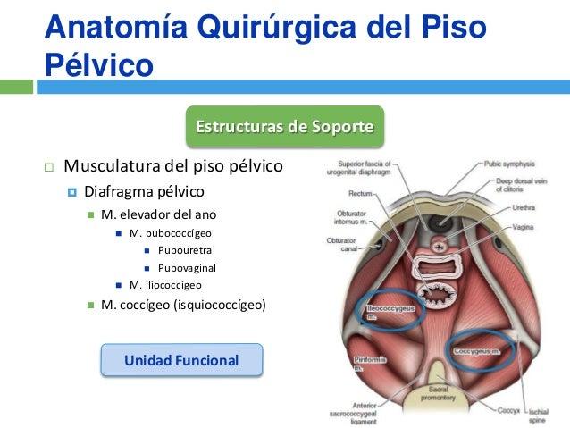 Cirugia Reconstructiva del Prolapso de Organo Pelvico