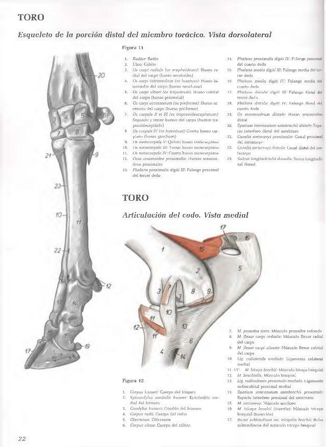atlas de anatomia veterinaria popesko