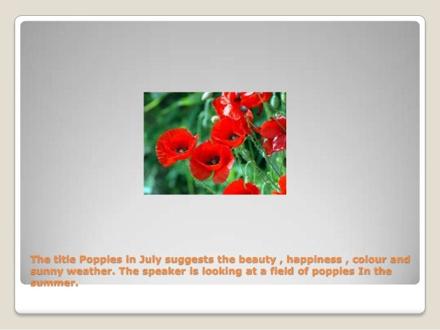 poppies in july powerpoint