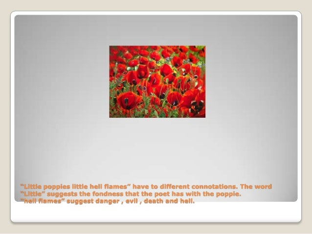poppies in july essay Two views of plath's life and career--by linda wagner-martin and anne stevenson linda wagner-martin sylvia plath was born in jamaica plain, massachusetts lady lazarus, daddy, fever 103, purdah, poppies in july, ariel, and others.