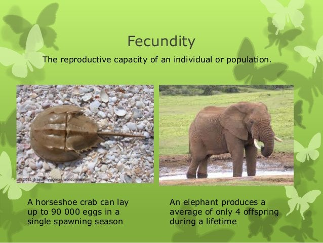Fecundity   The reproductive capacity of an individual or population.A horseshoe crab can lay          An elephant produce...