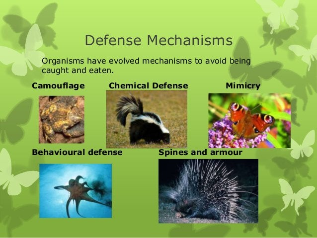 Defense Mechanisms  Organisms have evolved mechanisms to avoid being  caught and eaten.Camouflage       Chemical Defense  ...