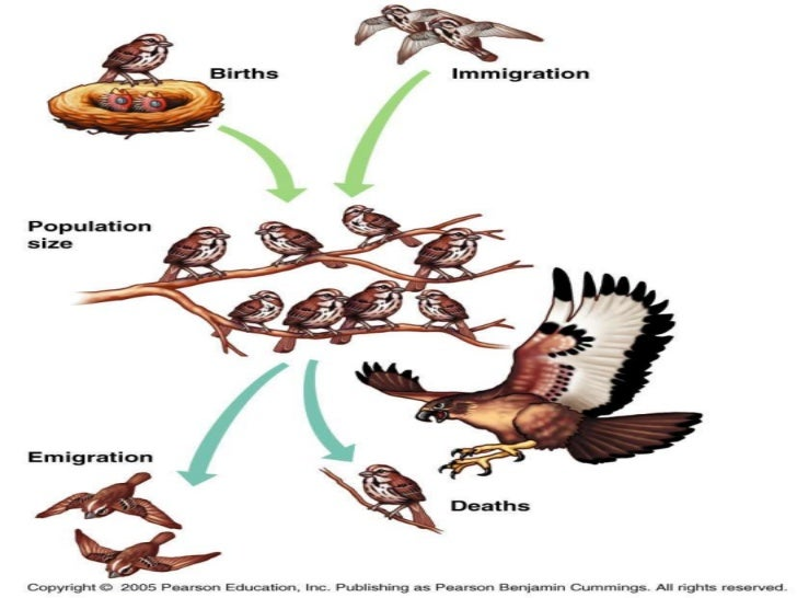 Chapter 53 Population Ecology. - ppt video online download