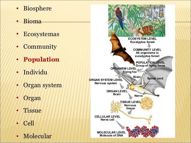 Grade Population Ecology