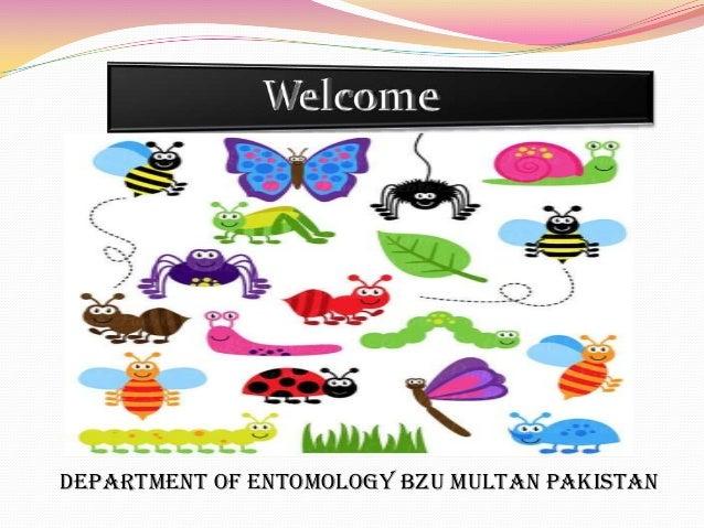 Department of Entomology BZU Multan Pakistan
