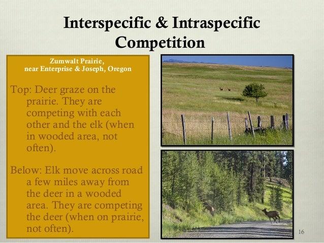 Interspecific & Intraspecific Competition Zumwalt Prairie, near Enterprise & Joseph, Oregon Top: Deer graze on the prairie...