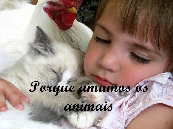 Porque amamos os animais