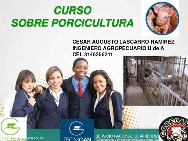 CURSO SOBRE PORCICULTURA CESAR AUGUSTO LASCARRO RAMIREZ INGENIERO AGROPECUARIO U de A CEL 3146356211