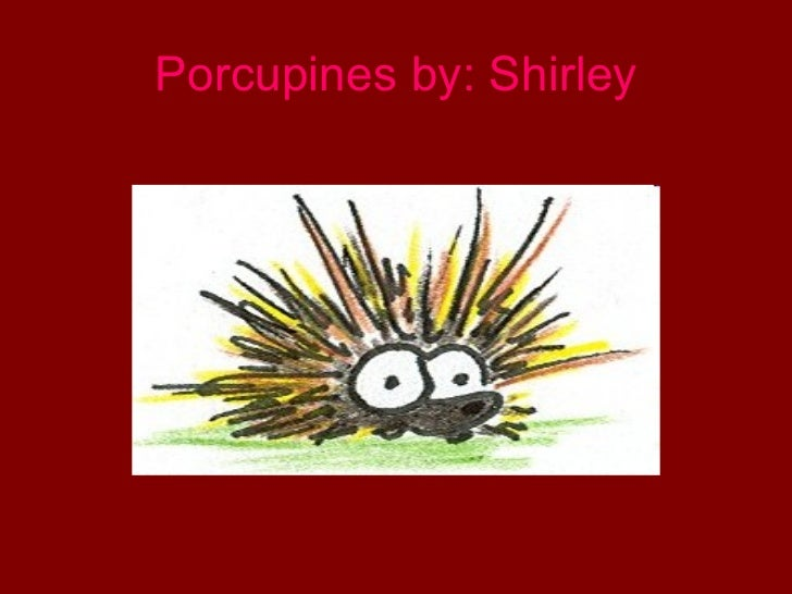 Porcupines by: Shirley