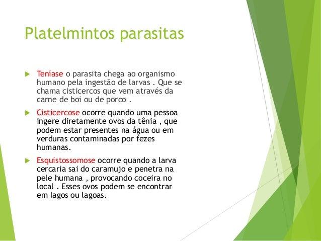 Sintomas de prevenção de vermes