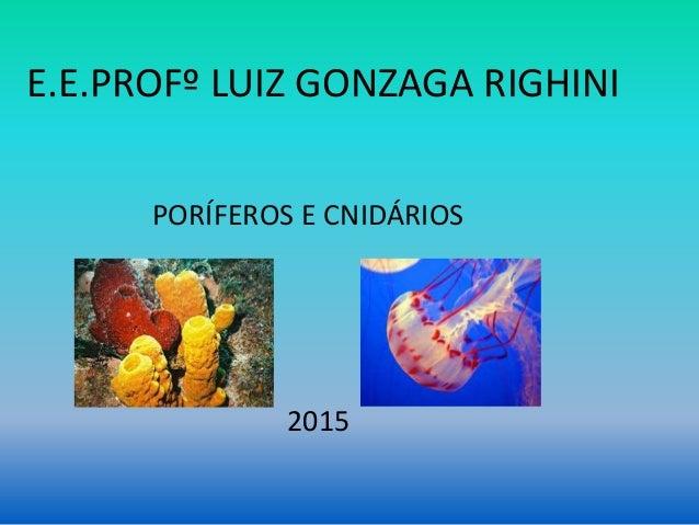E.E.PROFº LUIZ GONZAGA RIGHINI PORÍFEROS E CNIDÁRIOS 2015