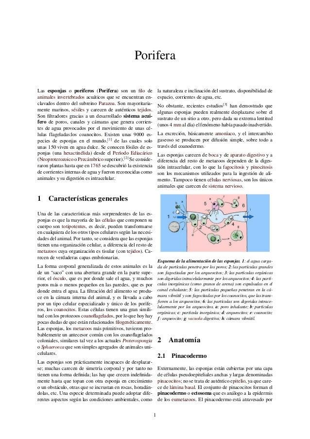 porifera-1-638.jpg?cb=1457389698