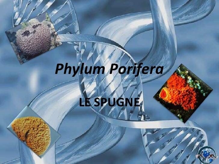 Phylum Porifera<br />LE SPUGNE<br />