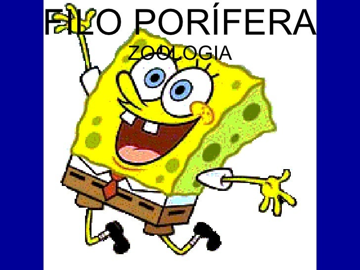 FILO PORÍFERA  ZOOLOGIA
