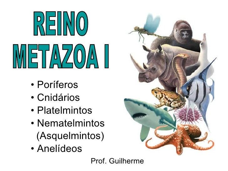 <ul><li>Poríferos </li></ul><ul><li>Cnidários </li></ul><ul><li>Platelmintos </li></ul><ul><li>Nematelmintos </li></ul><ul...